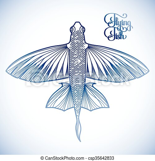Graphic flying fish drawn in line art style. top view. sea ... Underwater Clipart Black And White