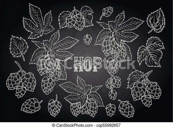 Graphic hops collection - csp55992657