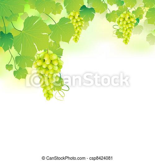 grapvine, uva - csp8424081