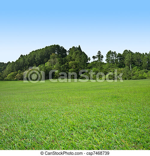 gras, grüne bäume - csp7468739