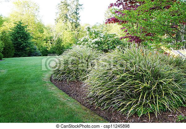 gras, groß, grün, hinterhof, bushes., landschaftsbild - csp11245898
