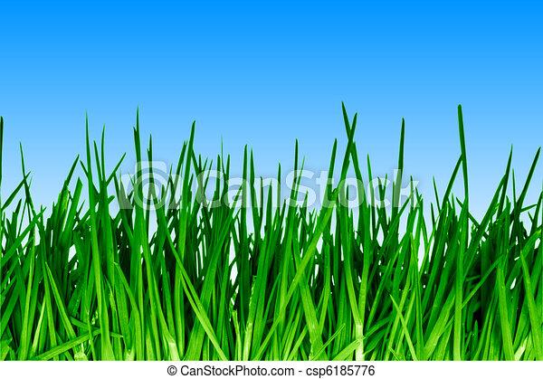 gras, groene - csp6185776