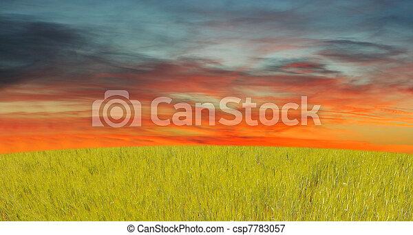 gras, hemel, rood - csp7783057