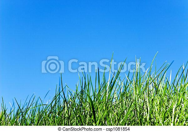 gras, hemel, tegen - csp1081854