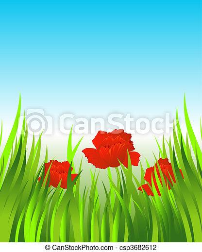 Rote Mohnblumen im Gras - csp3682612