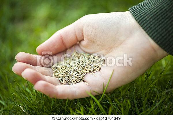gras, samen, halten hand - csp13764349
