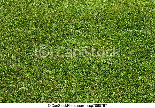 gras, textuur - csp7060797