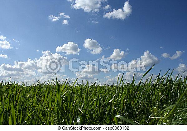 Grass and cloudy sky - csp0060132
