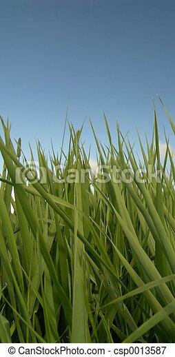 Grass and sky - csp0013587
