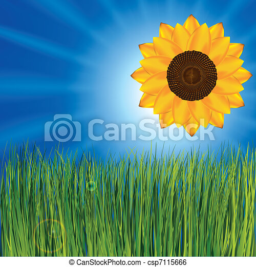 Grass And Sunny Sky With Sunflower Grass And Sunny Sky As