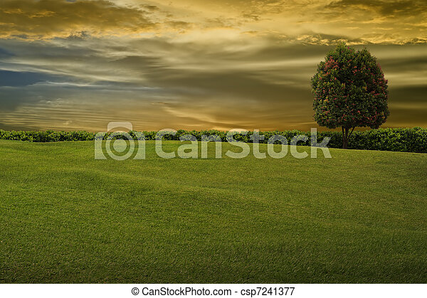 Grass and tree on evening sky - csp7241377