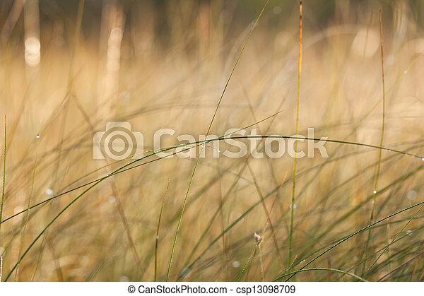 Grass blade Closeup photo ofa long grass or hay blade stock