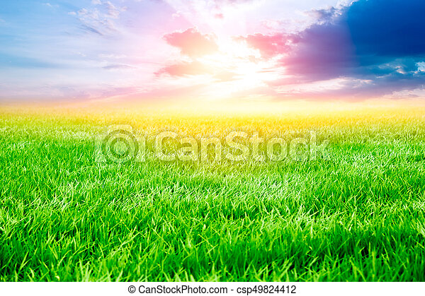 grass field sunset. Grass Field With Sunset And Sunrise Dramatic Sky. Beautiful Agricultural Landscape In The Summer Season.