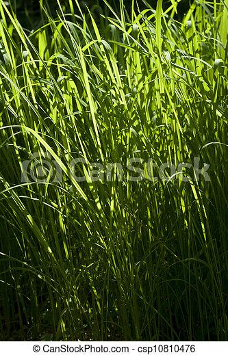 Grass Green - csp10810476