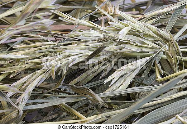 grass hay background - csp1725161