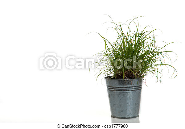 grass in a pot on white - csp1777960