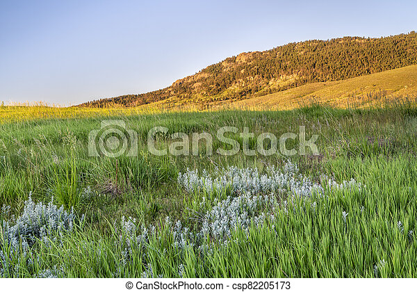grass in Colorado foothills of Rocky Mountains - csp82205173