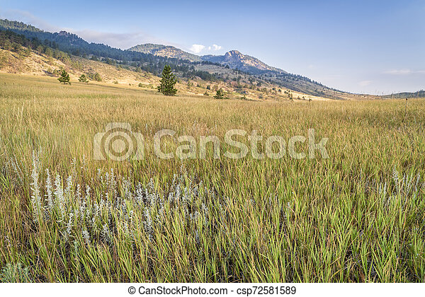 grass in Colorado foothills of Rocky Mountains - csp72581589