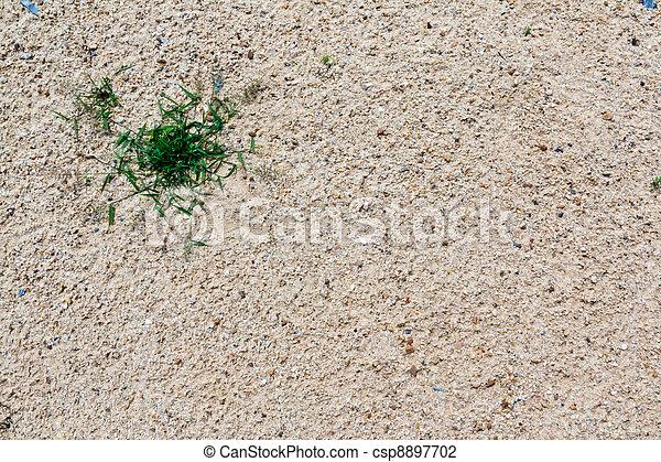 Grass in the desert - csp8897702