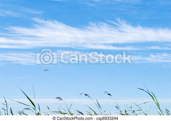 Grass in the wind at the blue sky with cloud lines - csp6933244