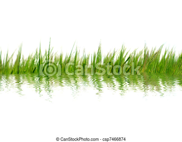 grass in water - csp7466874