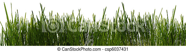 grass is isolated panoramic - csp6037431
