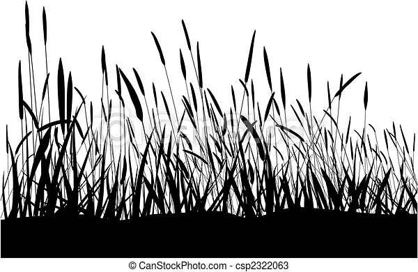 Grass On White Background - csp2322063