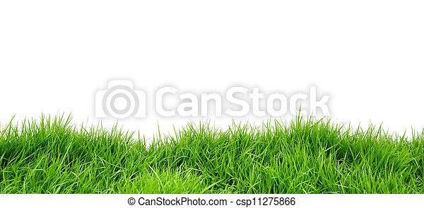 Grass on white background - csp11275866