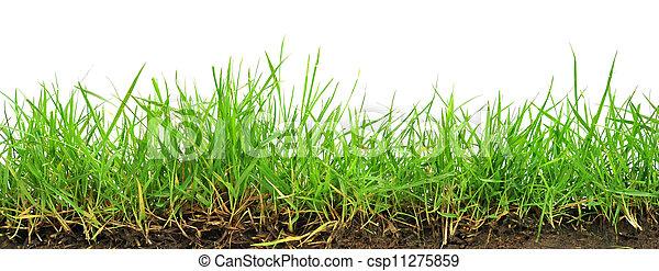 Grass on white background - csp11275859