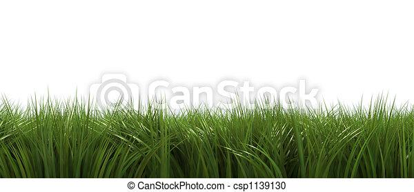 Grass on white - csp1139130