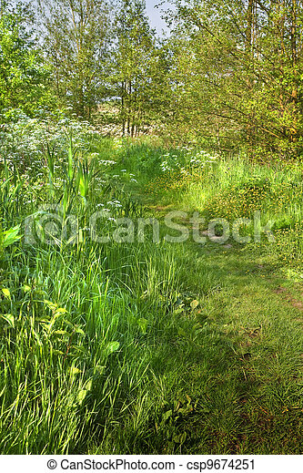 Grass path in country in spring - csp9674251