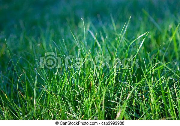 grass - csp3993988