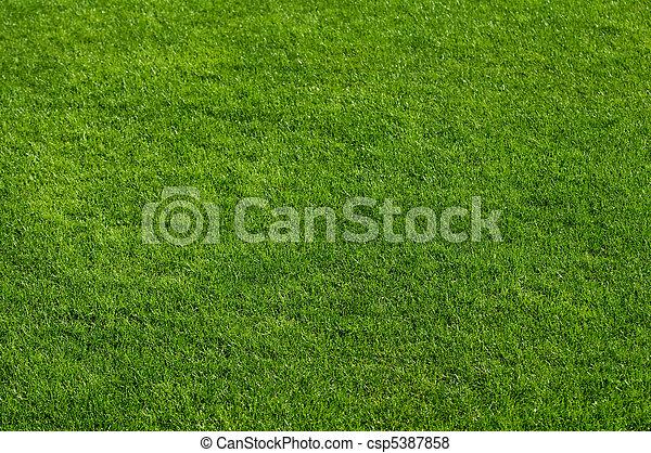 Grass - csp5387858