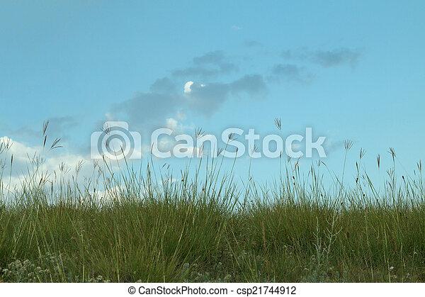 Grass Reeds - csp21744912