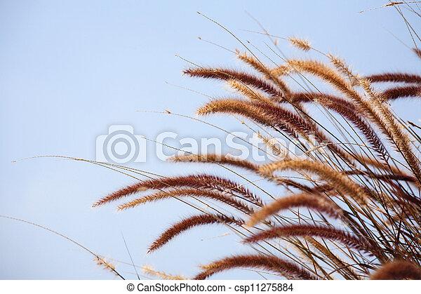 Grass reeds - csp11275884