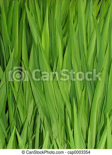 Grass Reeds - csp0003354
