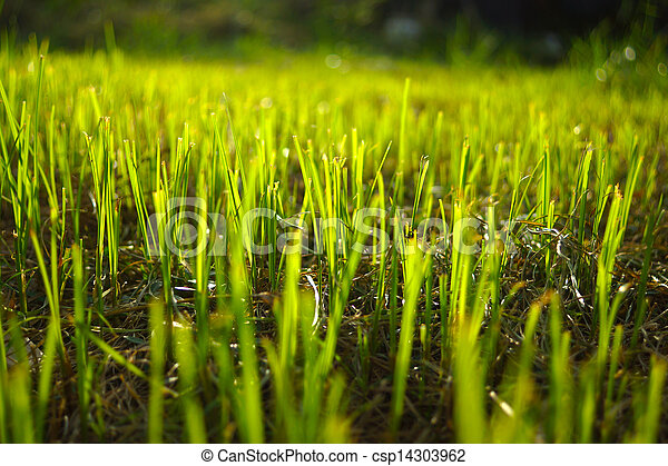 Grass regenerate in the garden. - csp14303962