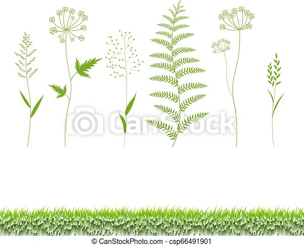 Grass Set Isolated White Background - csp66491901