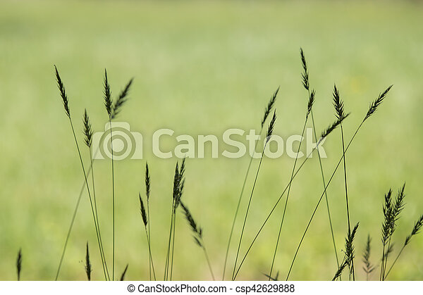 tall grass silhouette. Exellent Tall Grass Silhouette  Csp42629888 To Tall O