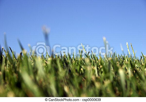Grass Sky - csp0000639