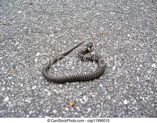 grass-snake on the road - csp11996015
