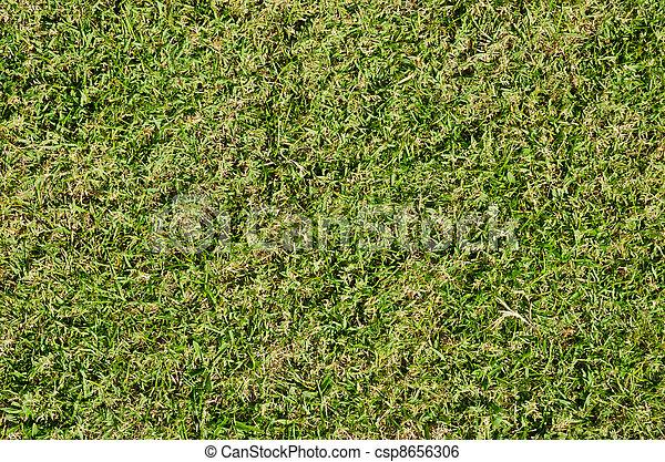 Grass - csp8656306