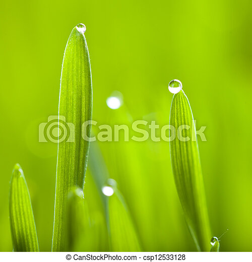 Grass - csp12533128