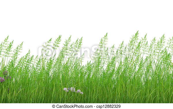 grass - csp12882329