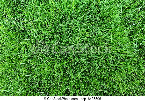 Grass - csp16438506