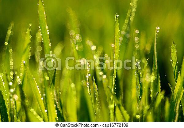 Grass - csp16772109