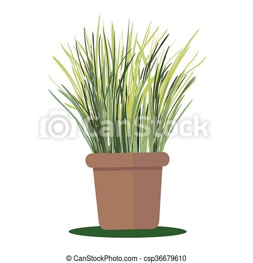 Grass - csp36679610