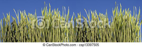 Grass with blue sky - csp13397505