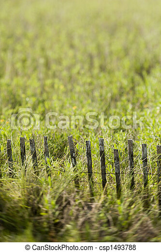 Grass with fence. - csp1493788