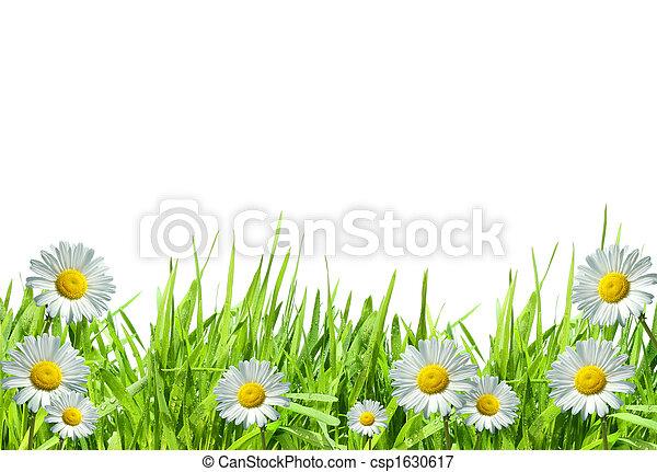 Grass with white daisies against a white - csp1630617